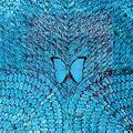 Обложка альбома Borboletta